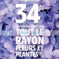 Intermarché : 34% de Remise Fidélité sur les Fleurs et les Plantes (06/06 – 07/06)